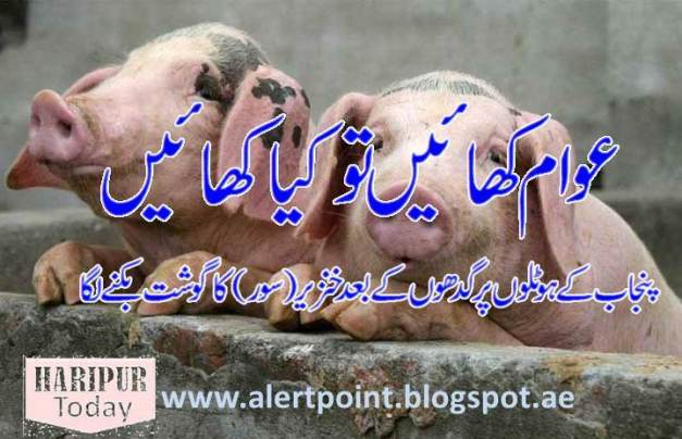 Pig Meat Sale in Punjab Hotels 1